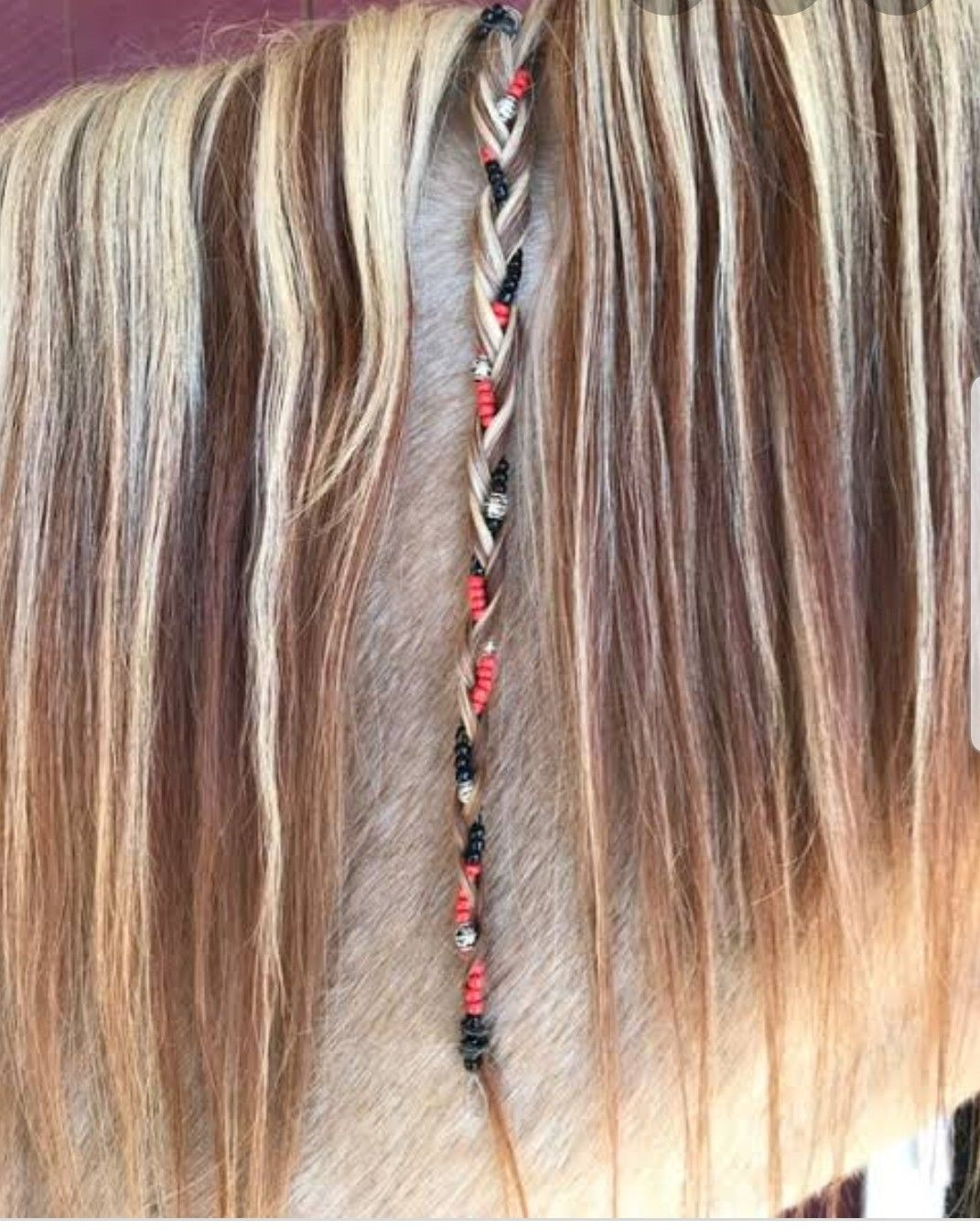 Horse Hair Coloring Images