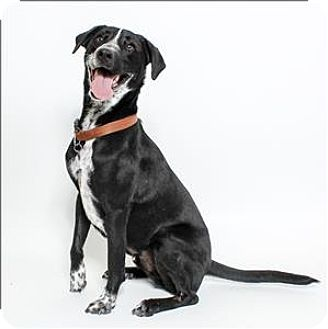San Luis Obispo Ca Border Collie Mix Meet Wofford A Dog For