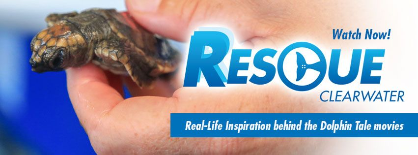 Are you looking for the real-life follow-up to the Dolphin Tale films? Watch our new digital series, Rescue-Clearwater. Dive into our world of saving marine animals & inspiring the human spirit! Watch NOW @ bit.ly/RescueClearwater