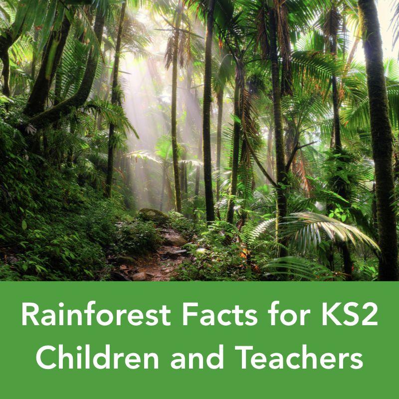 Rainforest Facts for KS2 Children and Teachers