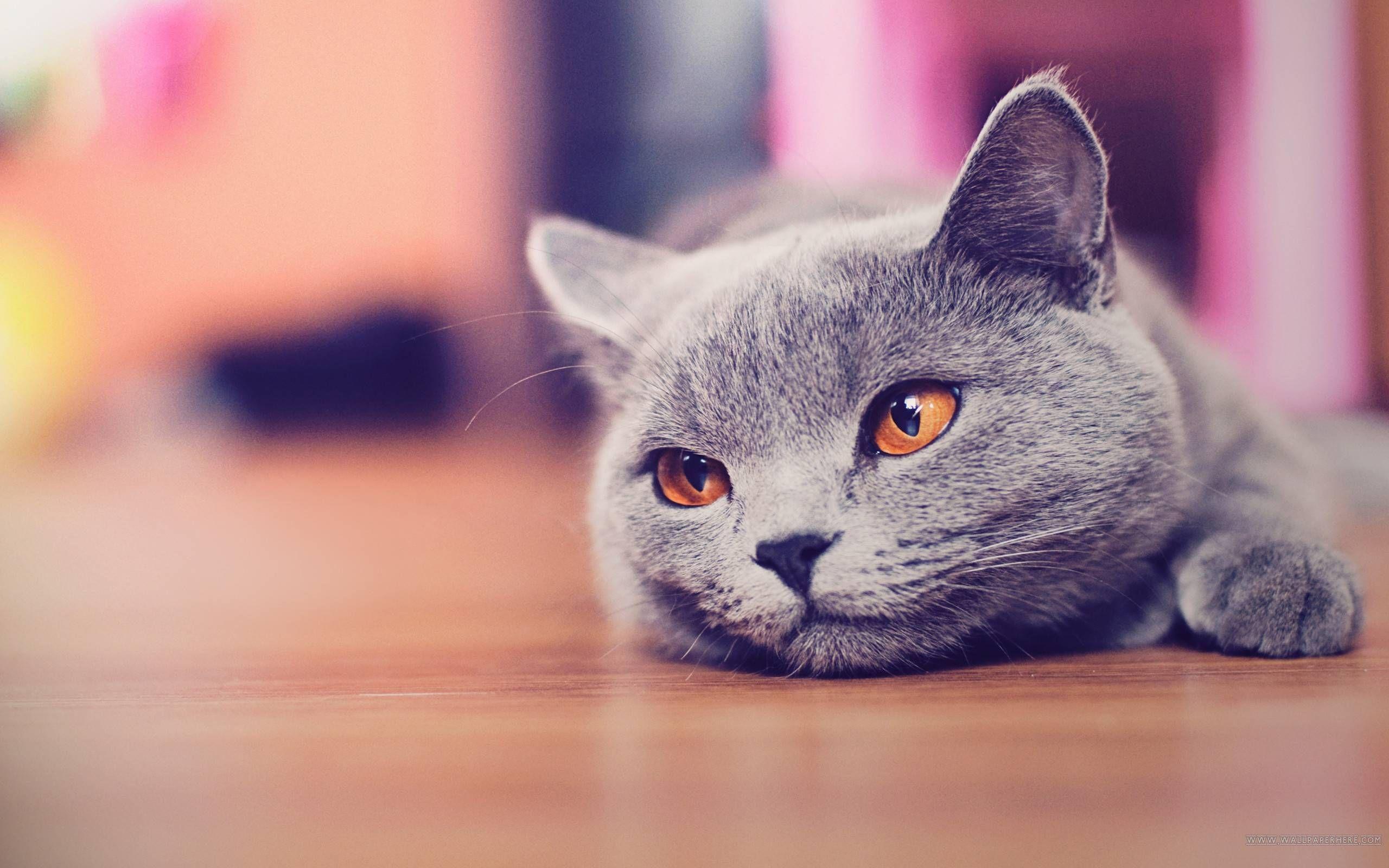 Pin Oleh Roxann Dawson Di Funny Cat Wallpaper Di 2020 Kucing Gambar Kucing Lucu Hewan
