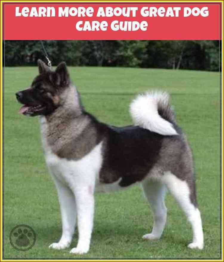 Follow This Great Dog Care Guide To Help You Akita dog