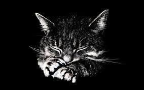 Dessin Chat Noir Et Blanc Recherche Google Kitten Wallpaper Cats Cat Wallpaper