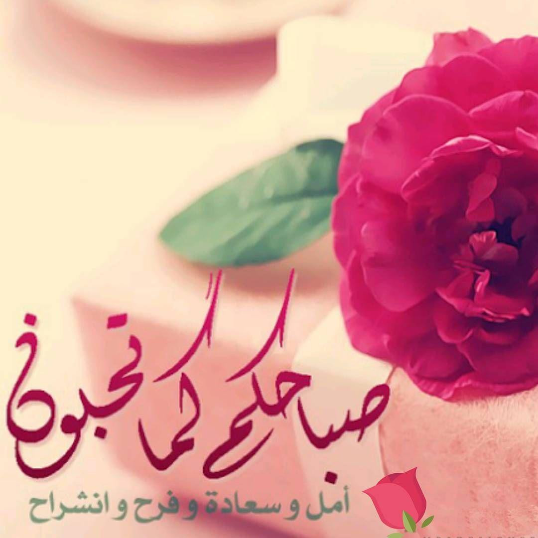Desertrose جعل الله صباحكم كما تحبون سعادة وفرح ويومكم مشرق ومليء بالخير والتفاؤل Morning Greeting Good Morning Inspirational Quotes Beautiful Morning
