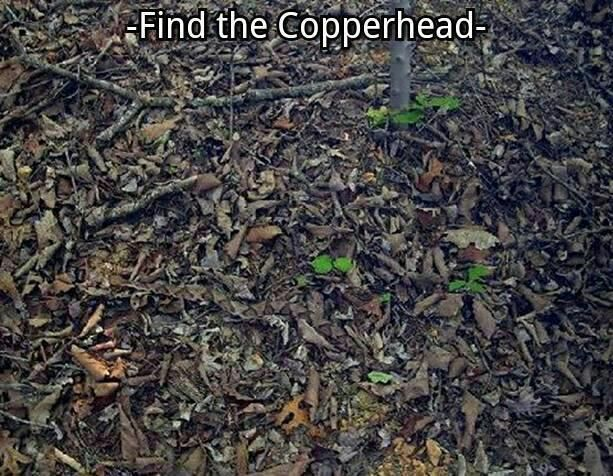 FIND THE COPPERHEAD LOL