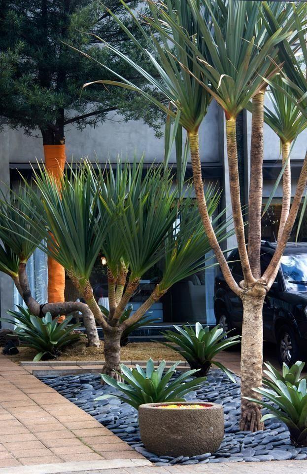 33 Fabulous Front Yard and Backyard Landscaping Ideas - Florida landscaping idea...#backyard #fabulous #florida #front #idea #ideas #landscaping #yard