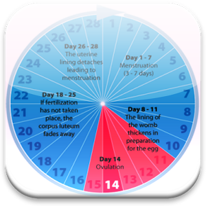 Ovulation to conception timing is key baby calculator pregnancy due date menstrual also cycle chart health benefits pinterest rh