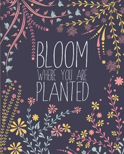 Bloom Where You Are Planted Well Said Pinterest Plants