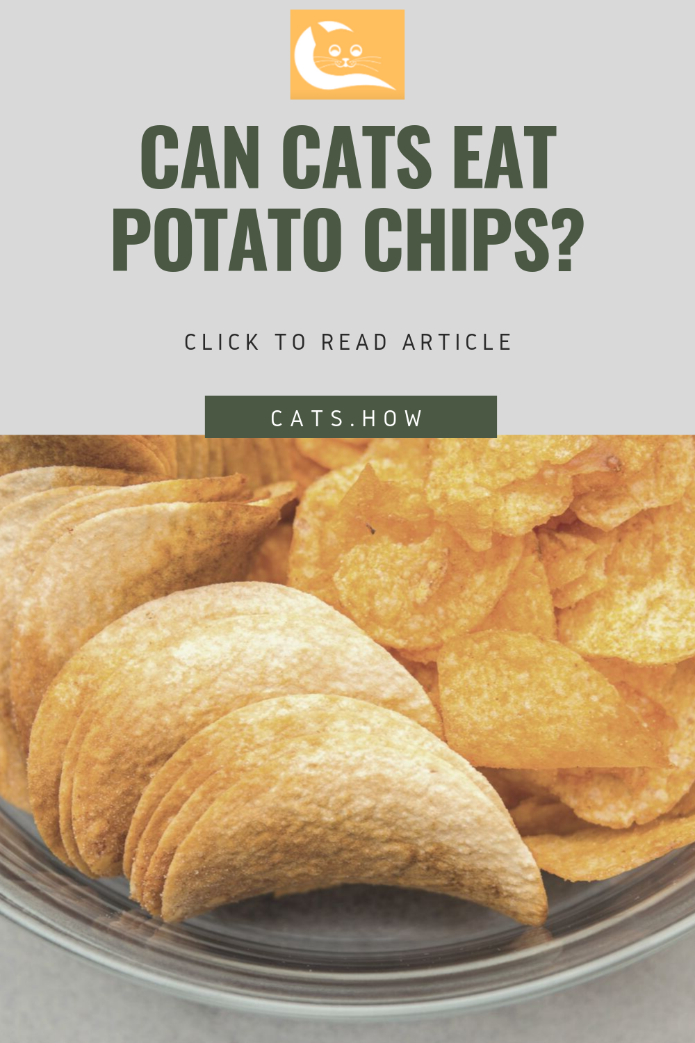ᐉ Can Cats Eat Potato Chips Cats How All About Cats