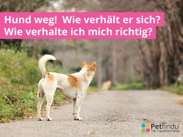 Facebookblog Hundweg Hunde Hundchen Training Hundeverhalten