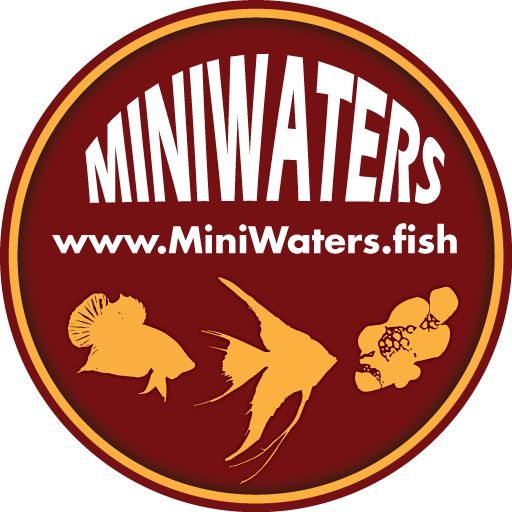 For Those Who Missed Macna The Lightning Project Online The Secret Freshwater Aquarium Fish