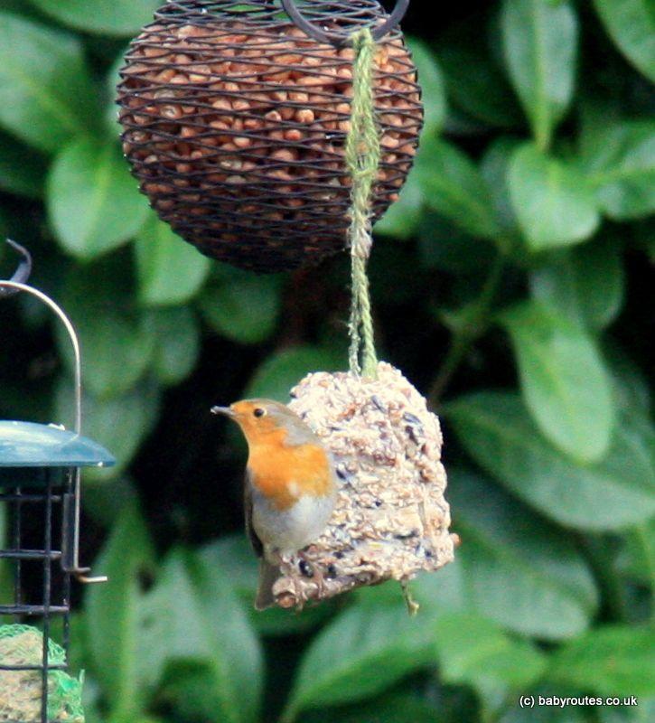 How To Make Bird Pudding (bird Cakes) For Hungry Winter Garden Birds.