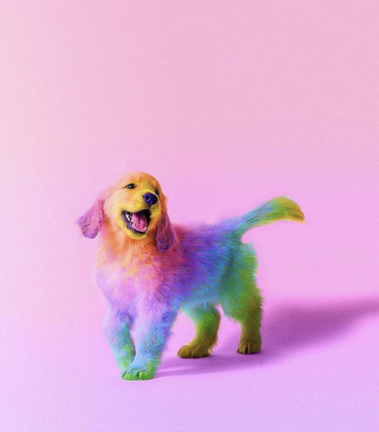 Cute Puppy Cute Animals Rainbow Dog Colorful Animals