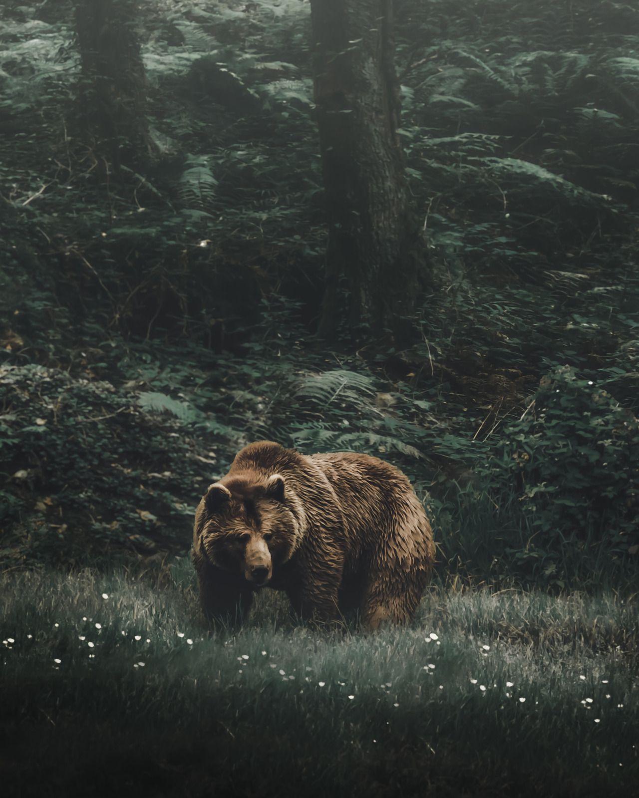 woods bear by Andrés Calvo Jr. #bears