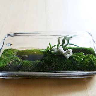A terrarium in a butter dish. With coral. Good god.