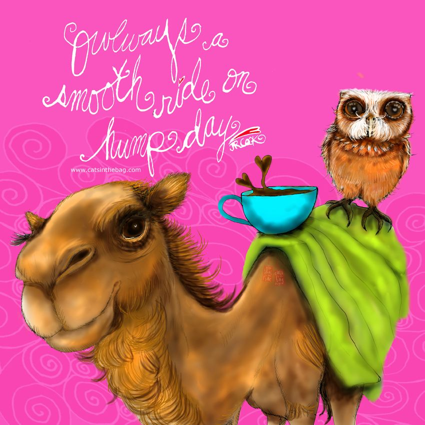 OWLways a smooth ride on hump day. Happy Hump Day everyone