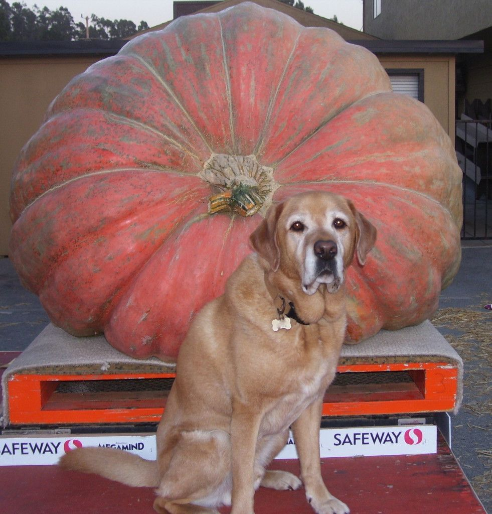 3 Surprising Health Benefits of Pumpkin for Dogs and Cats