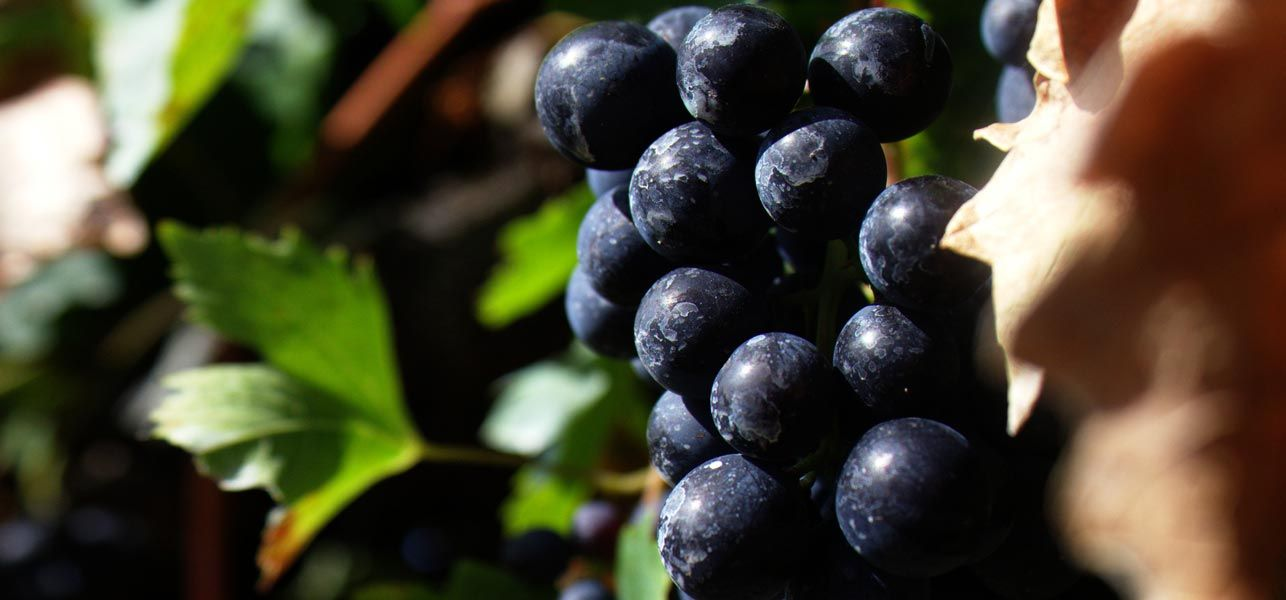 21-Best-Benefits-Of-Grapes-For-Skin,-Hair-And-Health
