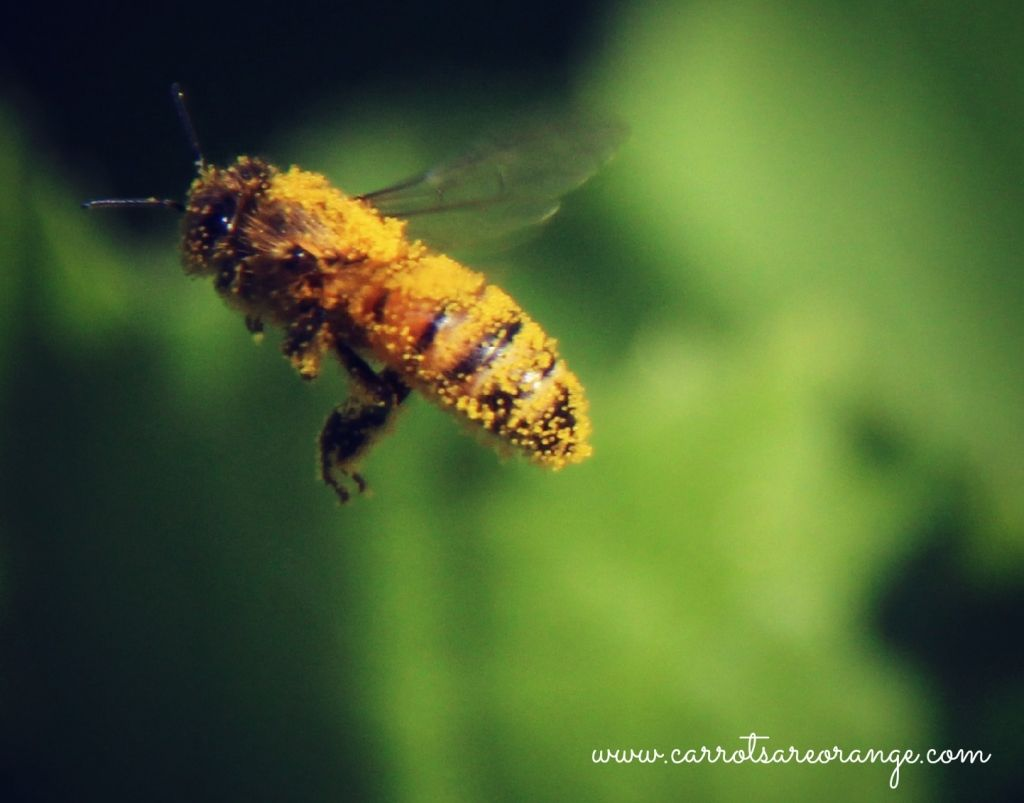 Learn About Parts Of The Honey Bee With This Free