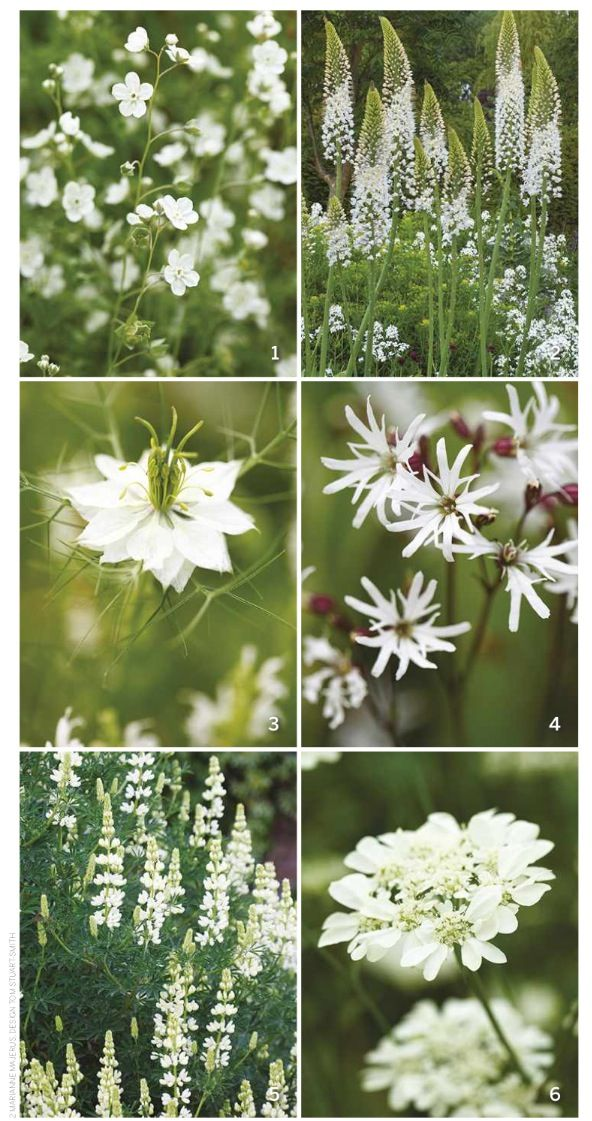 5 White Garden Flower Choices Early Summer Performers White