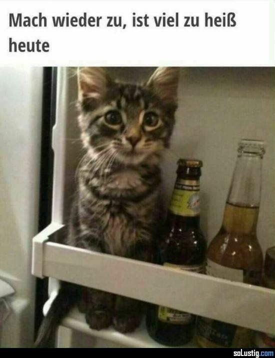 Bildergebnis für hitze kühlschrank lustig