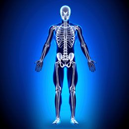 skeletal system diseases and disorders | shorts, presents and, Muscles