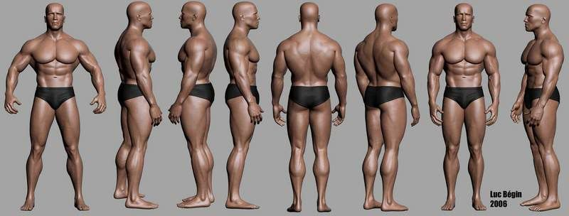 photo 4-1   art/anatomy and proportion   pinterest, Muscles