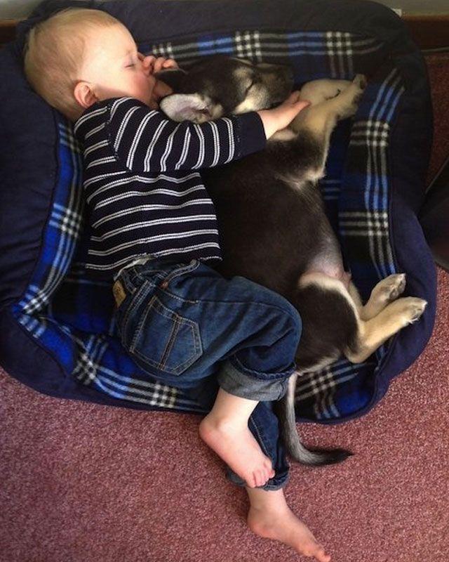 nino-duerme-con-perro-en-cama-perro