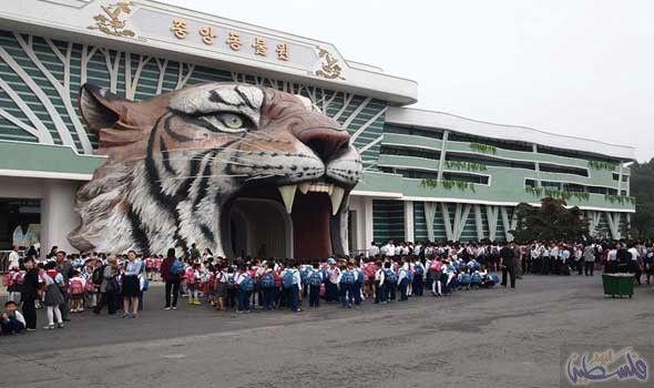 حديقة حيوانات رئيس كوريا الشمالية تضم قرود ا تجيد مهارات كرة السلة Lion Sculpture Statue Art