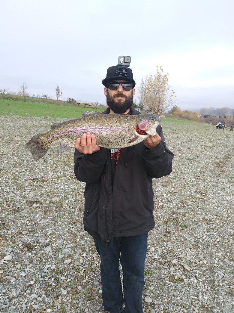 8.1 Quarry Lake Trout California Fish on entertainment