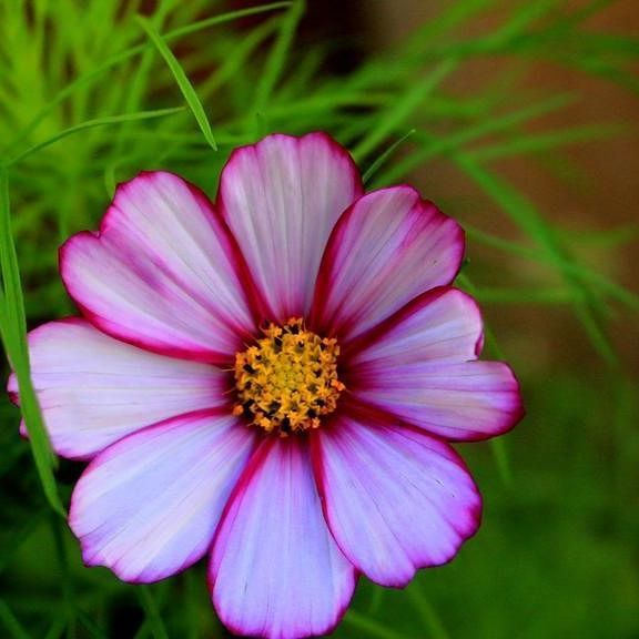 #foto #fotografie #flowers #nature