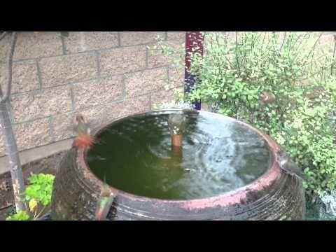 Hummingbird Bath - YouTube