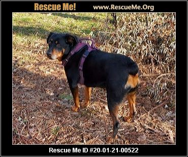 Wisconsin Rottweiler Rescue ADOPTIONS Rescue Me! in