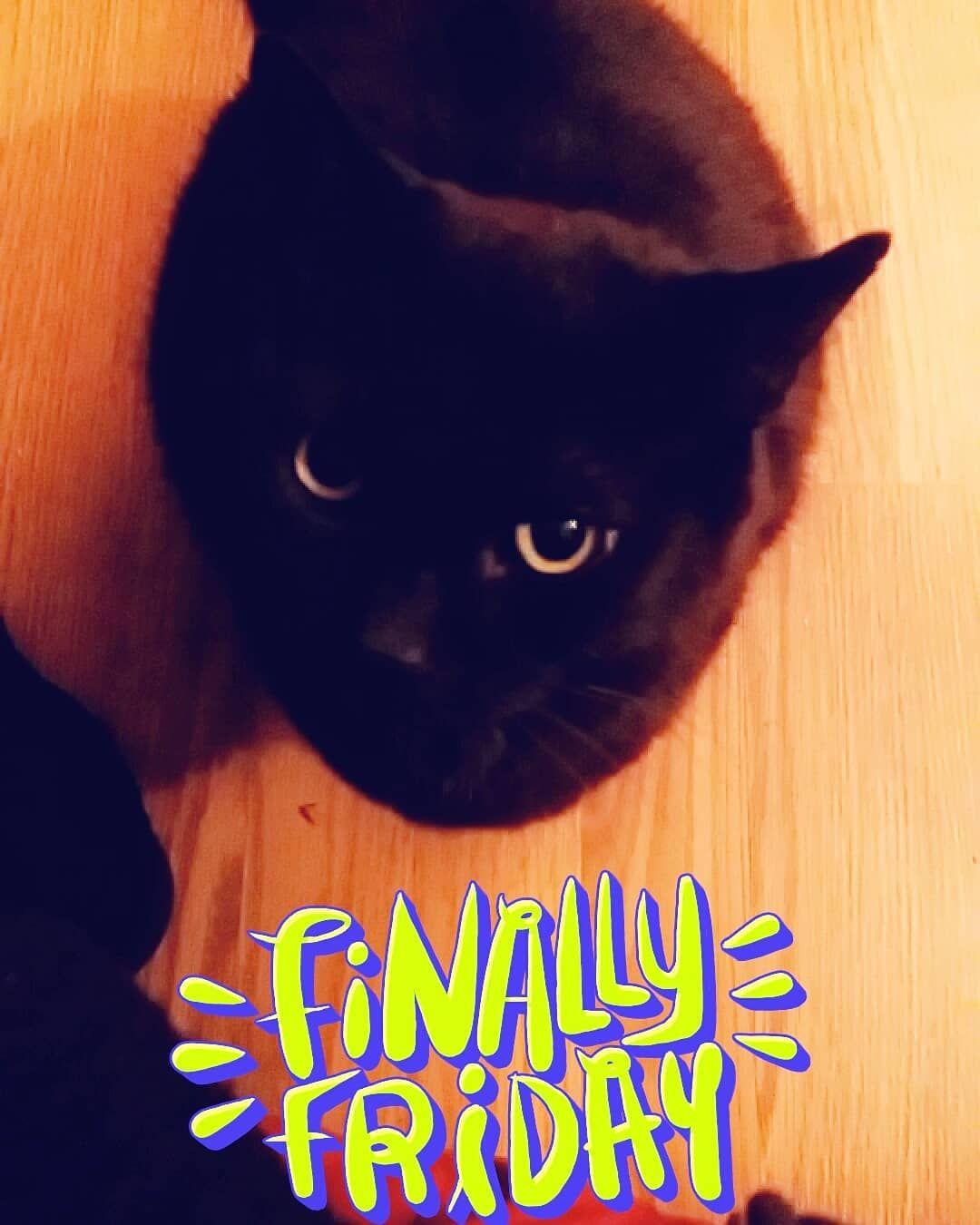 Tgif Tgif Midget Blackcat Catnip Kitty Cattoys Cat Kitten Grouchycat Grouch Meow Morning Goodmorning Friday Tgif Tgif Cat Toys Black Cat Kitty