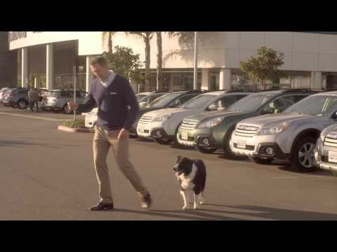 Here Is An Off The Wall Tv Commercial About A Car Salesman Who Speciallizes In Selling Subarus To Dogs On The Test Drive The Sales Dog Test Dogs Funny Dogs