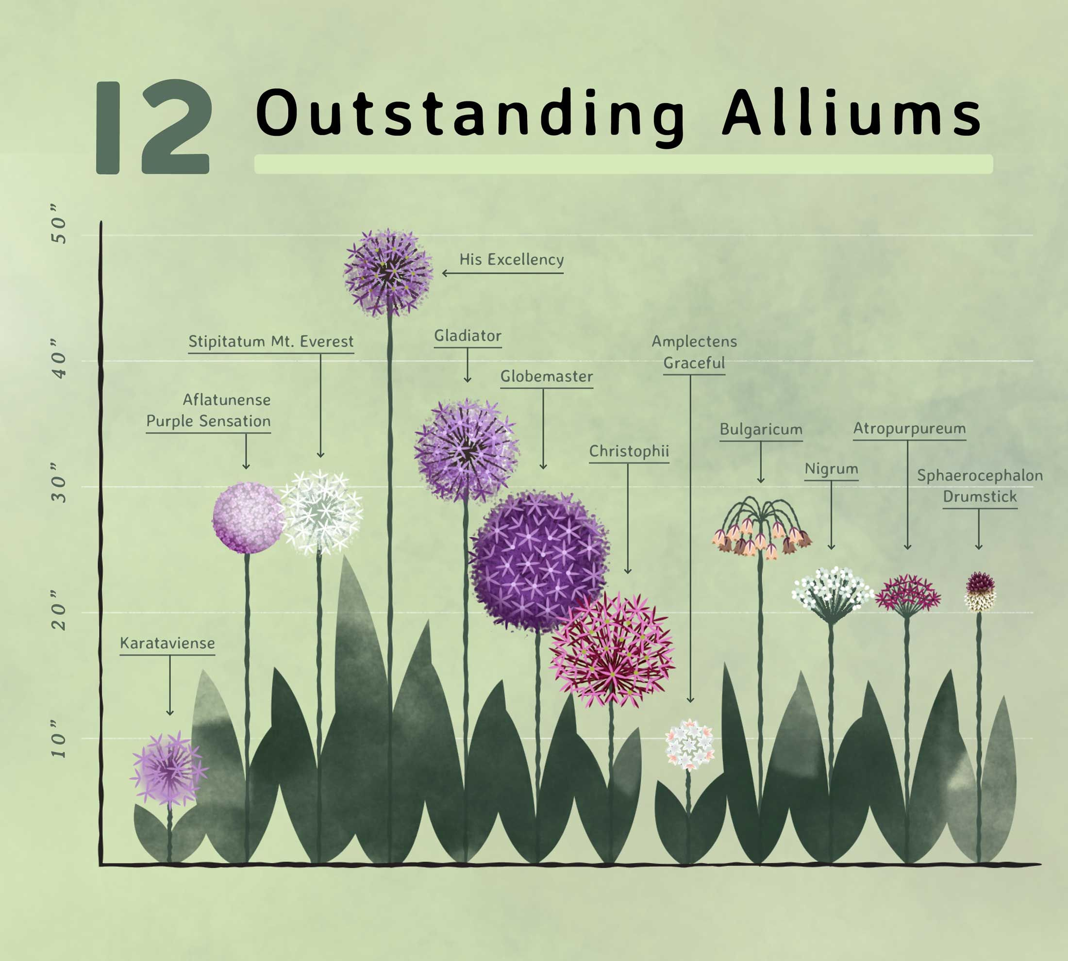 Planning Guide For Alliums Longfield Gardens Longfield Gardens Vegetable Garden Design Garden Planning