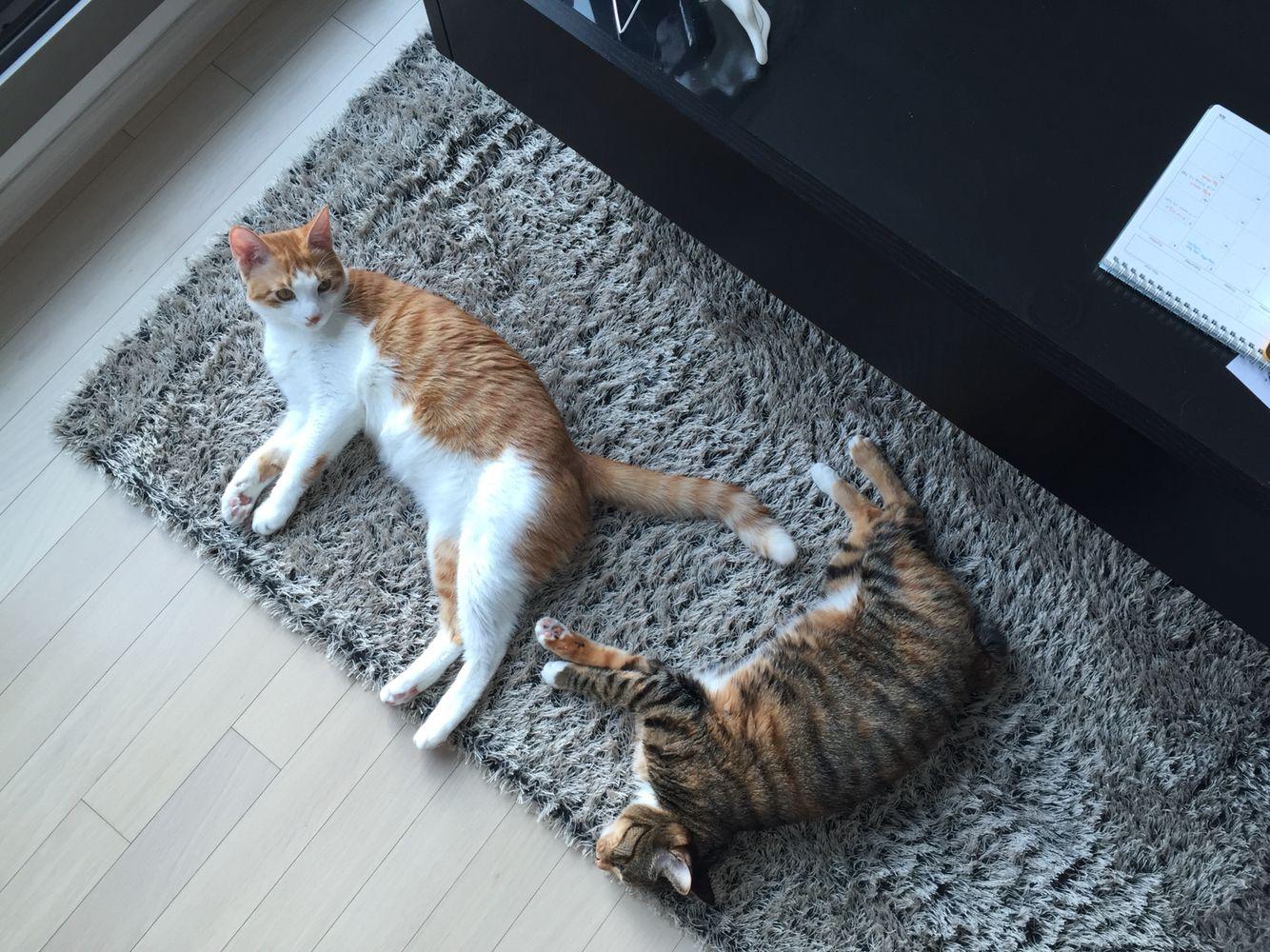 고양이팔자 상팔자  peaceful scene, TWO CATS