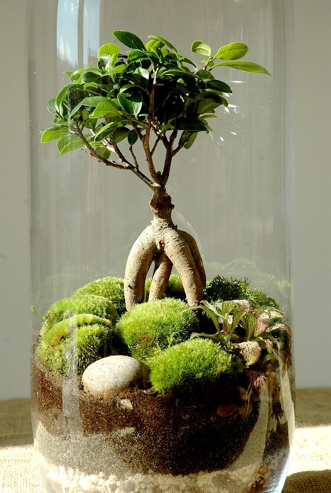 comment faire un terrarium humide en 8 tapes jard n. Black Bedroom Furniture Sets. Home Design Ideas