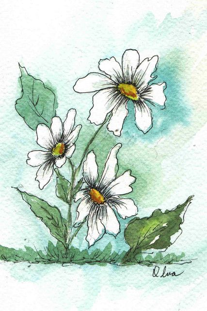 Pen Ink Watercolor Daisies With Images Watercolor Art