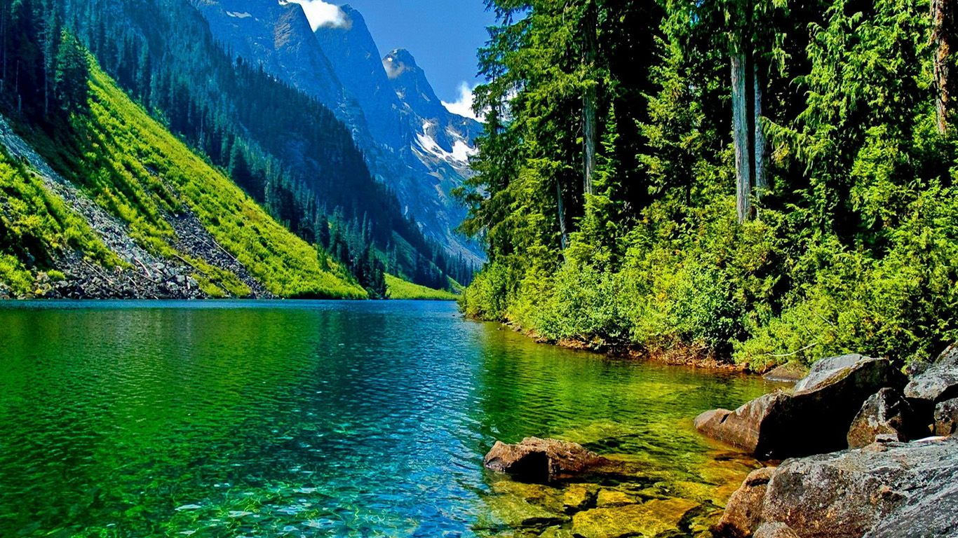 beautiful forest landscapes - google