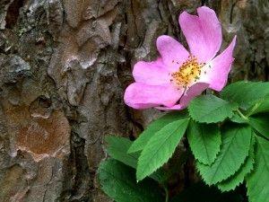 Flor junto al tronco de un árbol