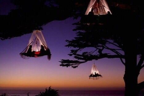 night in the tree, magical