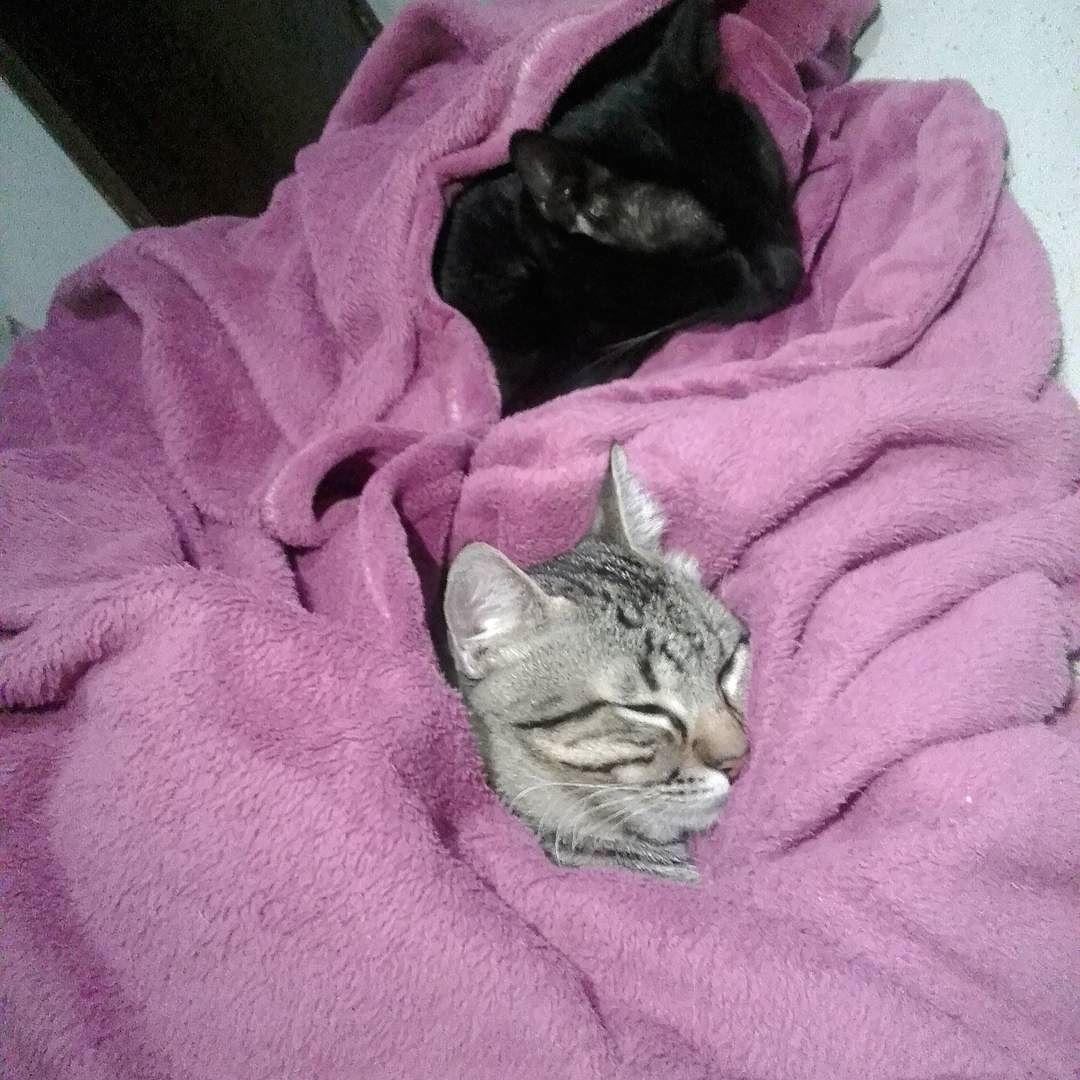 Friozinho  #catstagram #instacat #catsofinstagram #catlovers by camisleme3