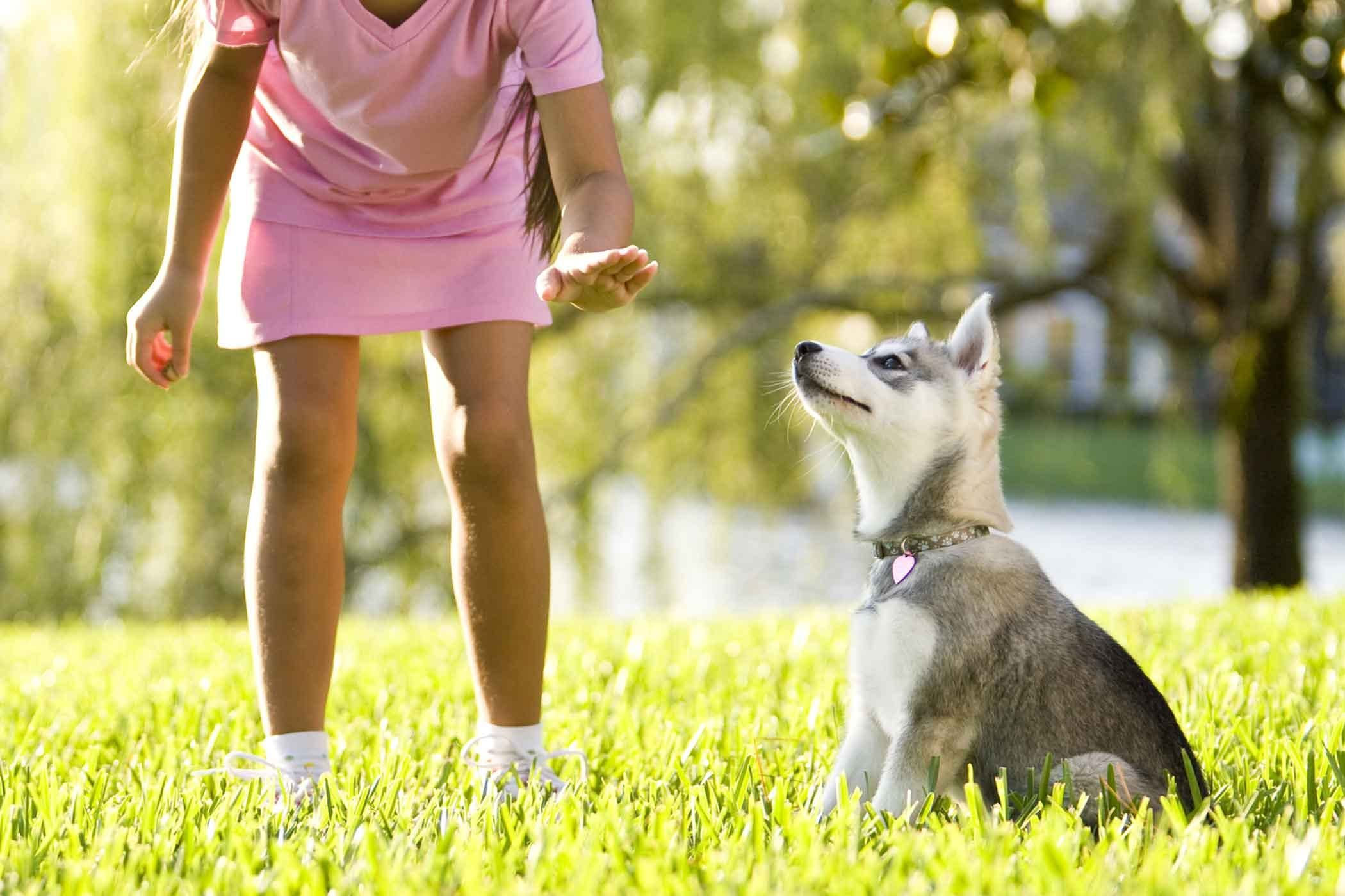 How To Train Your Rescue Dog To Sit Rescue Dogs Training Your