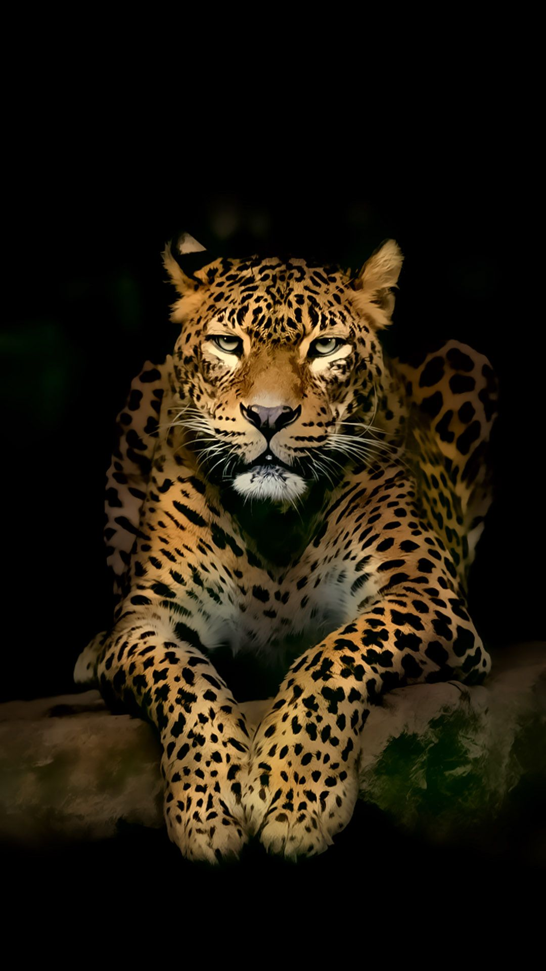 Serious Leopard 3d Spots Illustration Wild Animal Android
