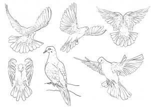 How To Draw Pigeons Step 4 Drawing In 2019 Bird Drawings Pigeon