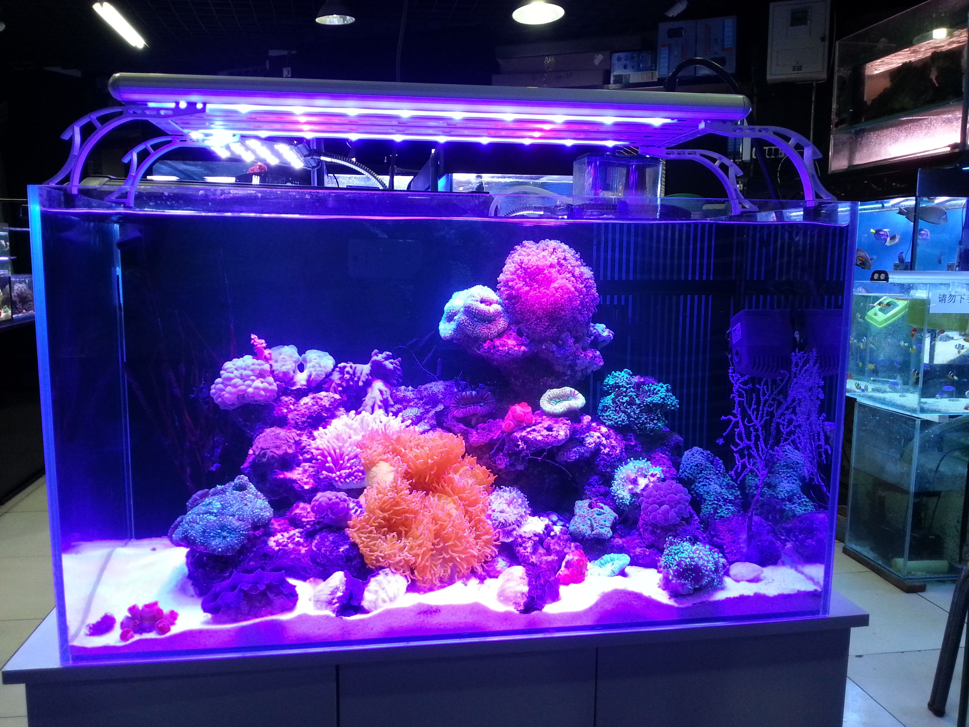 A Great Saltwater Aquarium Lit With Coolook Led Light Thanks To Our