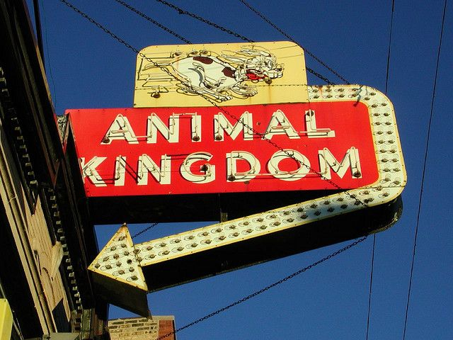Animal Kingdom Sign Vintage neon signs, Neon, Chicago