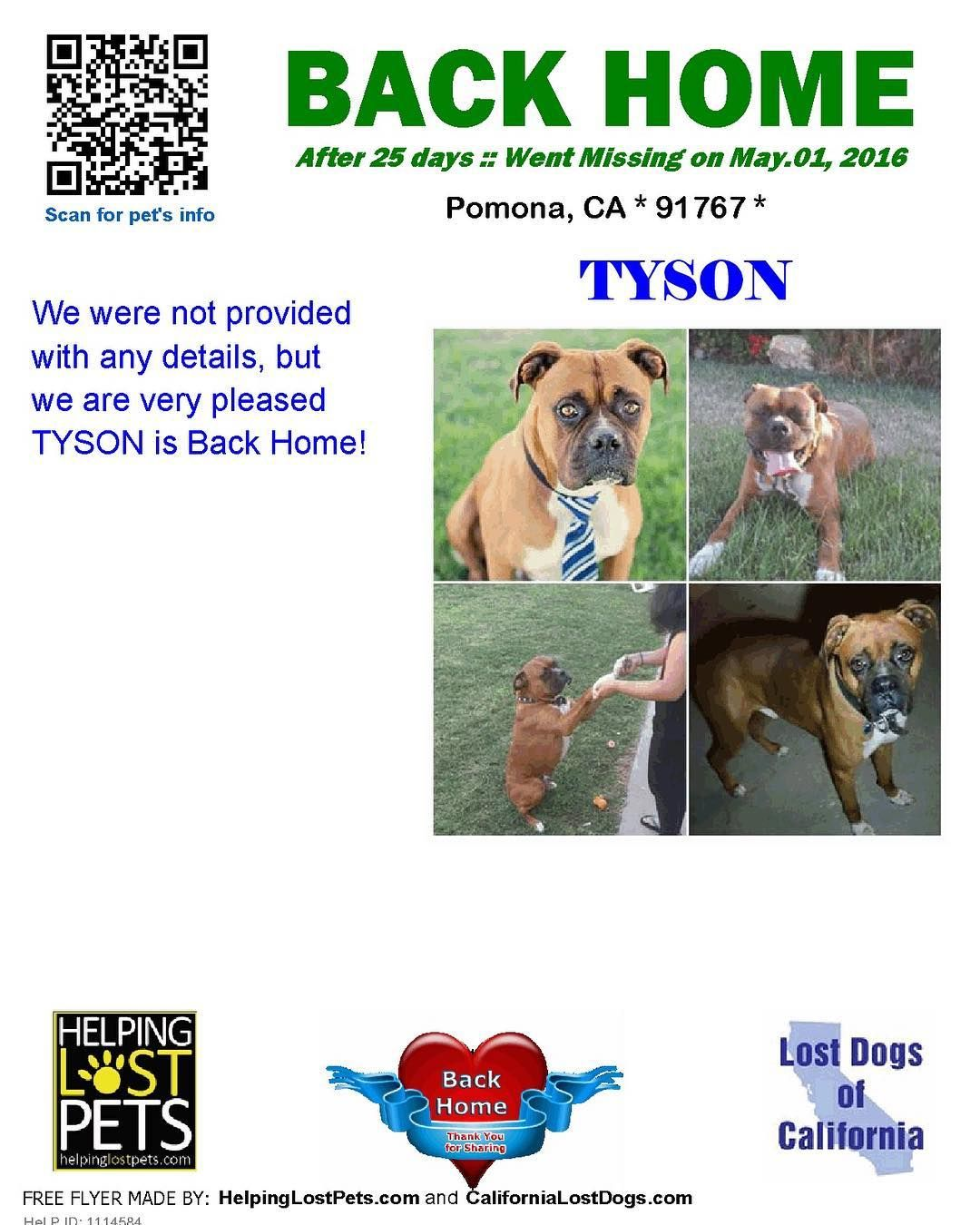 Backhome Tyson Boxer From Pomona Ca Has Been Reunited With