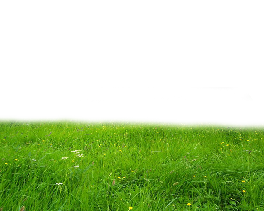 Png Grass By Moonglowlilly On Deviantart Grass Photoshop Photoshop Images Photoshop Textures